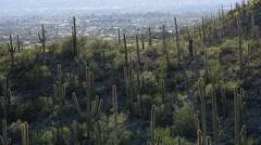 4K Unique Saguaro Cactus Hillsides Overlook Tucson Arizona Stock Footage
