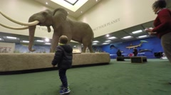 Boy looking at elephant in life science museum Stock Footage