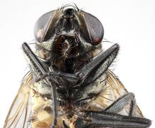 Stock Photo of House Fly Portrait