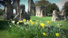 Ruins Abbey Glastonbury Spring Time Daffadeals Stock Footage