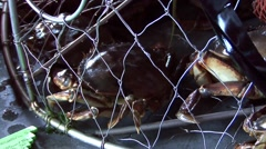 Alaska Crab In a cage Stock Footage