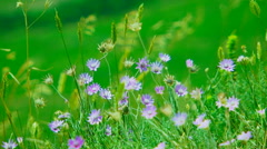 Small Wind Flowers Swaying On Wind Stock Footage