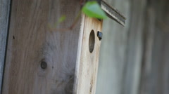 Songbird enters and leaves nest box on fence Stock Footage