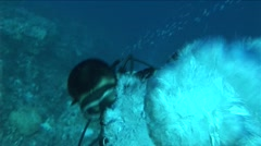 Huge Bubbles from Diver - stock footage