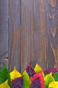 automn background - stock photo