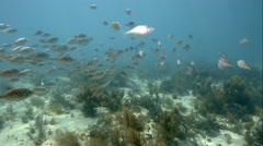 A school of baby fish. Stock Footage