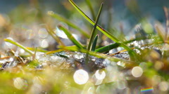 Green grass and dew drops frozen. timelapse. Stock Footage