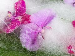 Bright abstraction with orchids - stock photo