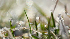 green grass and dew drops frozen. timelapse. - stock footage