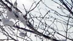 Panning closeup shot of tree brunches with snow and ice Stock Footage
