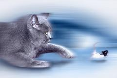 Cat in a pursuit of the mouse - stock photo