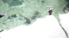 Stingray and Fish Eating Stock Footage