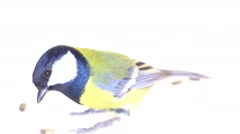 Abstract bird bird movement and feeding seed on a white background Stock Footage