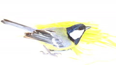Bright spring bird great tit Stock Footage