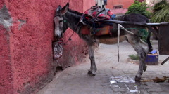 Zoom in to a donkey and cart in Marrakesh - stock footage