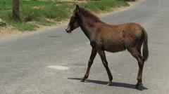 Mule Meets Modern Transportation Stock Footage