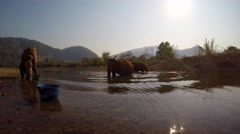 ASIAN ELEPHANTS RIVER CROSSING EATING FEEDING Stock Footage