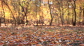 Autumn  forest landscape with leaves. Slider slow movement HD Footage