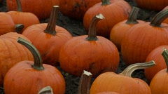 Harvested Pumpkins in the Field | EX3A6152 Stock Footage