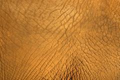 Elephant hide texture Stock Photos