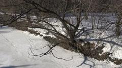 Winter Trees & Frozen River/ 4k Winter Landscape Stock Footage