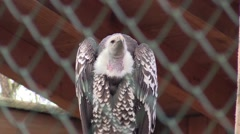 Vulture in a zoo in Germany Stock Footage