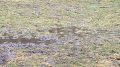 Muddy grass field in early spring rain Stock Footage