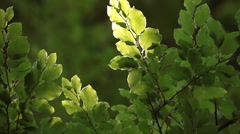 Looking at Leafs Waving in Wind Stock Footage