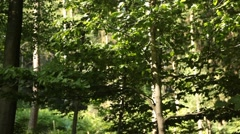 Slider Move in Forest Stock Footage