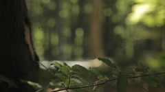 Closeup of Spider Web in Forest - stock footage