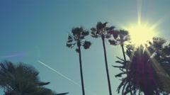 Palm Trees and Sun on Windy Day Stock Footage
