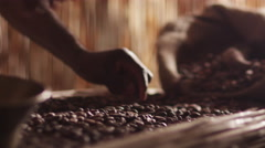 African Worker Is Sorting Coffee Bean - stock footage