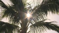 Palmtree Sunburst 1 Stock Footage