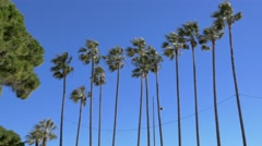 Palm Trees and Blue Sky on Windy Day Stock Footage