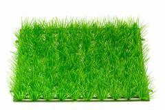Grass meadow Stock Photos