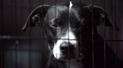 Stock Video Footage of Dog in a Cage