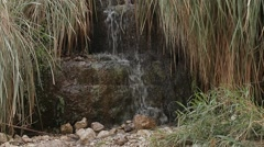 Ein Gedi Nature Reserve. israel - stock footage