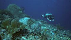Scuba diver encounters hawksbill sea turtle on coral reef Stock Footage