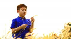 Happy asian boy with moving grass in Summer  Stock Footage