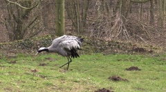 Crane in a zoo in Germany Stock Footage