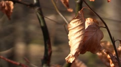 Autumn dry leaves in the wind Stock Footage