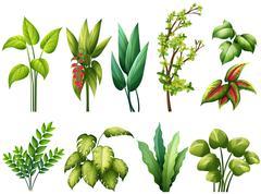 Stock Illustration of Plants