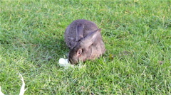 rabbit on the grass - stock footage