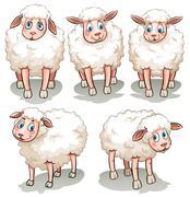 Five white sheeps Piirros
