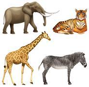 Four African animals - stock illustration