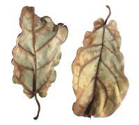 Dead leaves Stock Photos