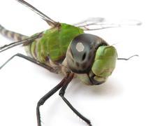 Dragonfly's look Stock Photos