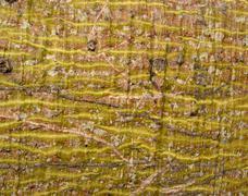 Bark 01 - stock photo