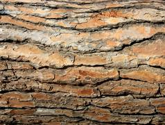 Bark 05 Red Brown - stock photo