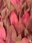 Purple leaves - stock photo